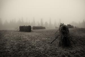 Hässjor i dimma.Foto: Kristofer Hallberg