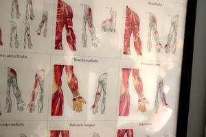 Det har varit mycket anatomi och latin att plugga in – viktiga kunskaper för en massör.