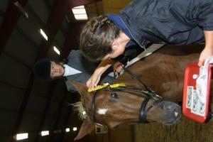 Caroline Jonsson Dahlberg, Gnarp, på sin nya häst Pumba, placerade sig som trea.