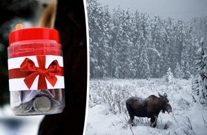 Skribenten föreslår en insamling för alla djur som drabbas av den tuffa vintern.