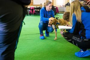 Syftet med projektet är att föreningar runtom i landet ska utöka sin verksamhet inom området fysisk träning människa, hund.