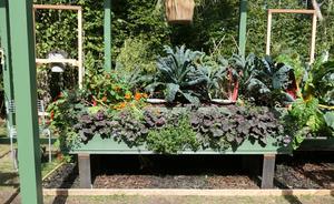 Bild från Pelargoniens idéträdgård på Solliden. Här syns en stor bädd, fylld av ätbara växter.