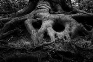 Skogen är rogivande – men också skrämmande. När människan i och med kristendomen separerade sig från naturen skapades förutsättningarna för dominans och motstånd.Foto: David Bartus