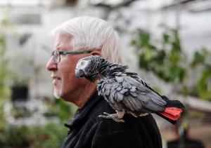Papegojan Poppe, 32 år är en ständig följeslagare på handelsträdgården.