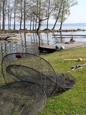 """""""Här är en bild tagen vid Sandhagen vid Hjälmaren när vi i PRO Stora Mellösa besökte fiskaren Hans Johansson."""" Foto: Mona Nicklasson, Stora Mellösa"""