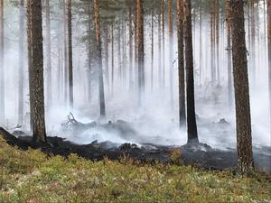 Sammanlagt har kring 12 000 hektar brunnit.Foto: Kurt Holm/Almunge brandstation