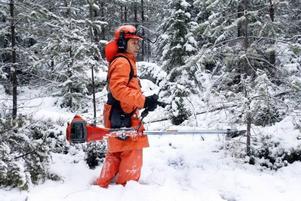 Sonaing på väg att kapa unga träd med röjsågen.