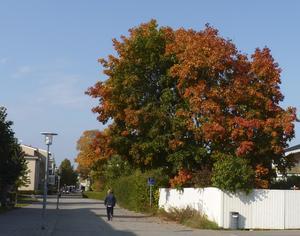 Östra Stationsgatan på Öster i vackra höstfärger.