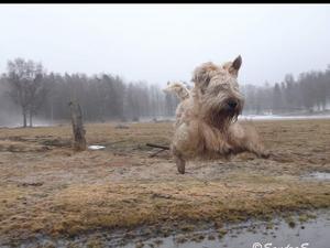 Om bilden: Min hund flyger över skaren. En gammal bild men fortfarande imponerande ögonblick taget mitt i språnget. Foto: Maria Söderkvist
