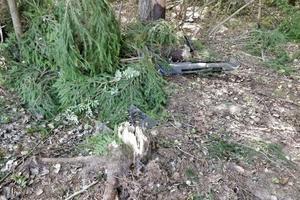 Kvinnan kolliderade med en älg och körde in i trädet.