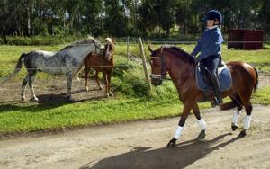 Elin Nylander och ponnyn Galax. I bakgrunden syns ytterligare två ponnyer som Elin tränar varje dag.