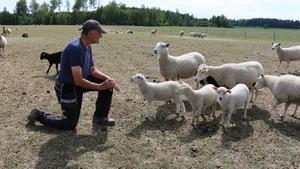 Per Hellstrand har grisar, kor och får på sin gård. Alla djurens mat påverkas av torkan.