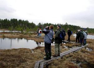 Många fågelskådare tycker om att vandra på spängerna på Knuthöjdsmossen.