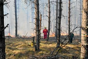 På fyra ställen i länet  kommer det att göras naturvårdsbränning.
