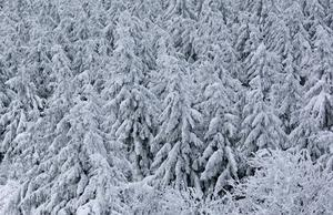 Så här sa skogen se ut för att vara klimatsmart. Oavverkad, skriver Lars Almström, Klimatsvaret. Foto: Jens Meyer