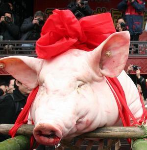 Horace Engdahl har roat oss med associationen om kulturmannen som (mans)gris. Foto: TT