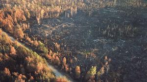 I Västmanland har det brunnit på flera håll den senaste veckan. Här är resterna branden i Rörbo, Sala. Risken för bränder är extremt hög till följd av torkan.