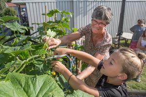 Lena Zetterberg inspirerar till odlingslust. Här är det Pontus som skördar slanggurka.
