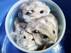 En av hamstrarna hittades i en svart sopsäck. Det var bitmärken i både plast och kartonger.   Bild: Maria Björklund