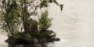 Svanen har hittat en trygg plats på den lilla ön i älven. Där får den vara ifred från rovdjur.