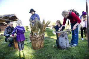 Mikael, Matilda, Klara och Maria Backman bekantade sig med konsten att bereda lin. Bland annat fick de häckla linet genom att kamma det med häcklor, som är träbitar med piggar av metall.