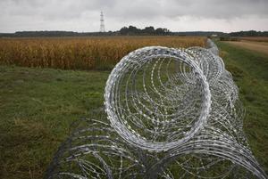 Ungern är tveklöst det EU-land som gått längst i att urholka EU-idealen, menar debattörerna. Bild från gränsen mellan Ungern och Slovenien där taggtrådstängsel satts upp.