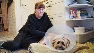 Carin Engström tillsammans med hunden Uffe en dag efter hemkomsten från djursjukhuset.