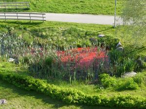Blodröd damm vid Öster Mälarstrand