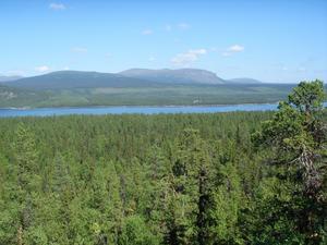 Årrenjarka gammelskog räddades av Ett klick för skogen.