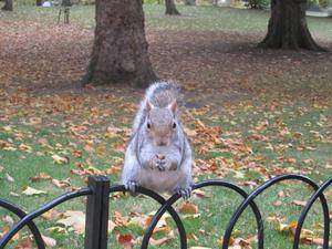 Den här ekorren var så snäll och poserade så fint för oss i Hyde Park när vi var där på höstlovet!
