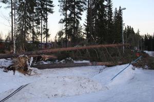 Över hela anläggningen på och nedanför Älvåsen låg stormfällda träd.