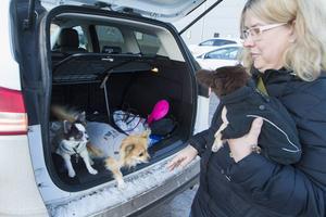 Katarina Risshall köper julklappar till hundarna Loui, Ella och Putte.