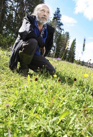 – Brunkullan är minskande. Platser där den växer försvinner, säger Bengt Petterson, koordinator för länsstyrelsens åtgärdsprogram för hotade arter.