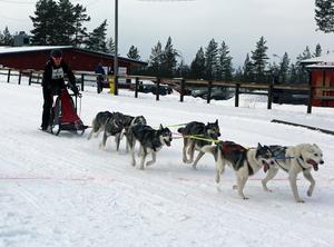 Sveg bjöd på välpreparerade spår när Nordic Open för hundspann avgjordes som en försmak inför nästa års VM-tävlingar.