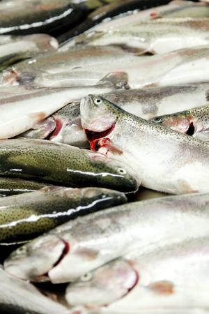 Det är fisk av arten regnbåge som drabbats av sjukdomen på anläggningen i Gärdnäs.
