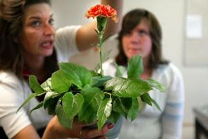 Tina Lei visar att varje blomma har sin bestämda plats.