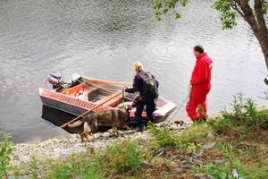 En av de två vanliga polishundarna som hjälpte till med sökandet. Dessutom deltar två av polisens hundpatruller med kriminalsökhundar som är specialtränade för att söka i vatten.