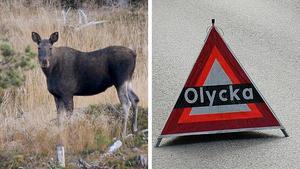 En trafikolyckan mellan en personbil och en älg inträffade under fredagsmorgonen.Foto: Pontus Lundahl/TT