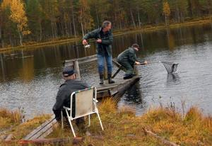 Per Olof Mårts och Jimmy Wahlberg i samarbete när en fisk fångas in.