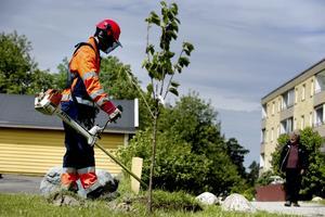 Att sommarjobba är ett viktigt steg på vägen till ett yrkesliv, poängterar Centerpartiet. Foto: Pontus Lundahl /TT