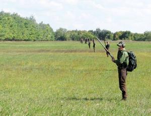Tryckjakt innebär att många jägare sakta föser viltet framför sig mot tidigare utställda passare.