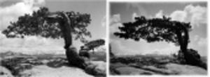 Ansel Adams glasnegativ funna på loppis - värda 1,5 miljarder