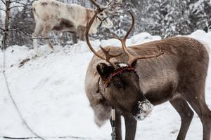 Julmarknad i Lofsdalen. Foto: Nina Wenker