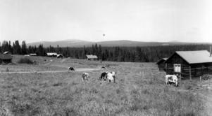 Västra Galåbodarna vid Oviksfjällen 1977.