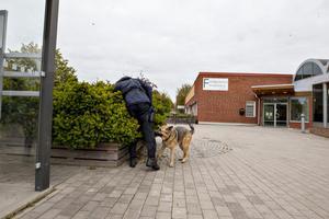 Polisens hundförare sökte igenom buskage och rabatter i närheten av brottsplatsen.