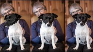 Holly är en Jack russell terrier med mycket energi och med glimten i ögat. – Om jag bara säger nose work så far öronen direkt rakt upp på henne. Hon tycker om det jättemycket, säger matte Ingrid Ludwig.