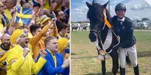 Idrotts-Jämtland har fått en ny världsstjärna, efter att Jack Eriksson tait VM-guld i islandshäst i helgens tävlingar i Berlin. Bilden är ett montage.