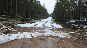 Skogsbilvägen Hurtigrutten har används som skidspår under vintern och är långt ifrån farbar efter som den inte plogats upp.