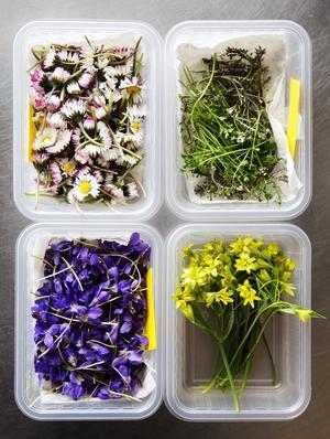 Om en stiftelse får röja, rusta och vårda Auroraängen kommer gamla skärgårdsväxter att växa på stranden, däribland ängsbräsma (till höger upp på bilden). Foto: Ola Torkelsson/TT