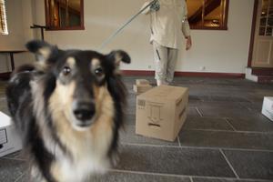 Leia från Lövnäs började skälla på kameran. Det är viktigt att inte störa hundarna medan de söker, eftersom tiden är knapp. I bakgrunden skymtar föraren Anne-Maj Graf.